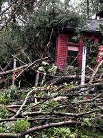 Branches and trees cover this Douglas, Massachusetts house, where officials are investigating whether a tornado touched down overnight.