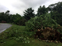 Meteorologist Michael Page says trees were pointed in different directions on the ridge of Ephraims Way in Upton, which makes it a likely spot to have seen a tornado given the elevation and storm path